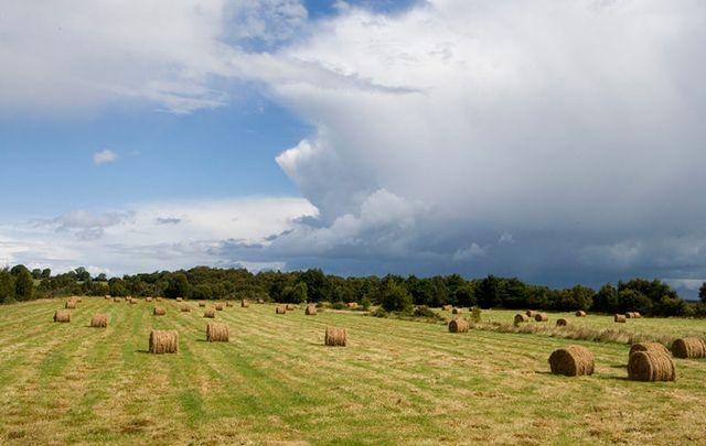 Hay bales in County Longford