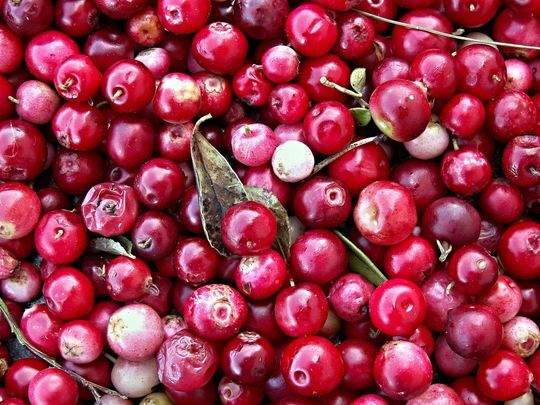 Try this great cranberry alternative for your pudding this year.