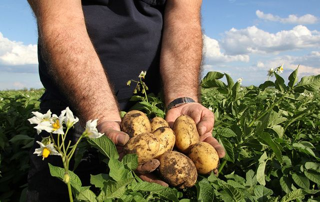 """The potato crop has been part of the Irish journey and we want to help it to be part of the Kenyan journey going forward."""