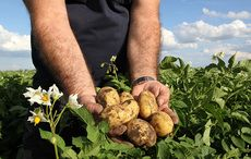 Thumb_potato_farmer_hands_clay_plants_istock