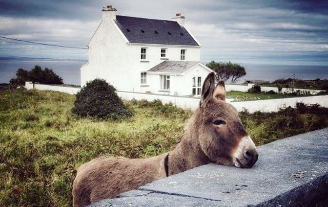 Look at this little fella on Inis Mór shot by @cazzib28/Instagram.