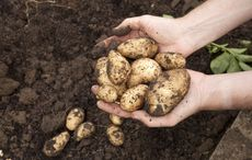 Thumb_healthy_new_potatoes