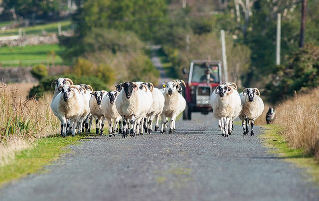 Irish farms at risk: The warning comes as a US firm takes over a number of loans issued by Ulster Bank.