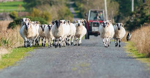 Cropped_irish_farm_farms_farmer_sheep_istock