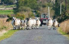 Thumb_irish_farm_farms_farmer_sheep_istock