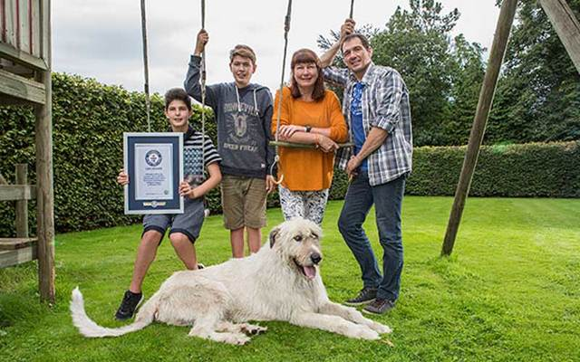 Keon, the Irish Wolfhound with the longest tail in the world, pictured with his family.