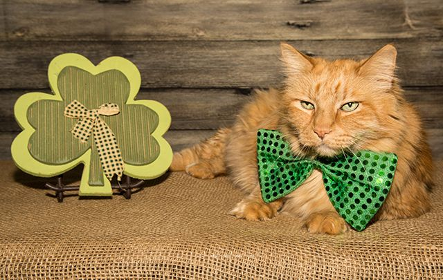 The best green and shamrock covered items from the IrishCentral shop to get you starting on decking the family out in green this March 17.