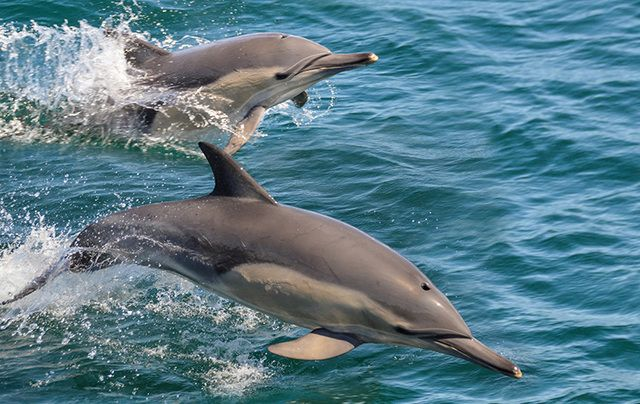An Irish YouTuber has captured drone footage of a pod of dolphins swimming at Malin Head.