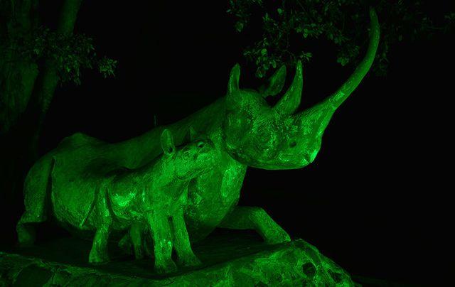 Rhino statues (Kyela and Lankeu), Nairobi National Park, join Tourism Ireland\'s Global Greening.