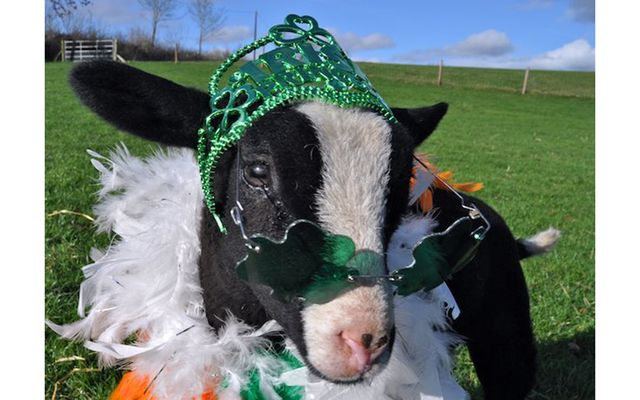Kittens and puppies, lambs and horses, hedgehogs and raccoons - these animals are even more excited for St. Patrick's Day than you are!