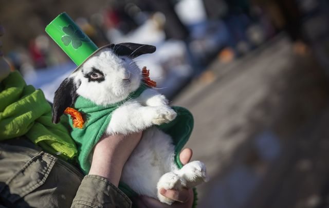 Does it get any better than this rabbit dressed for St Patrick\'s Day?