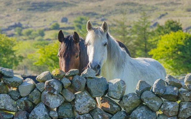 There aren't many horse owners in Ireland who would eat their horse but they don't mind selling it for someone else to eat, it seems.