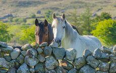 Thumb_horses-ireland