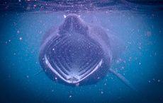 Thumb_basking-shark-blasket-islands