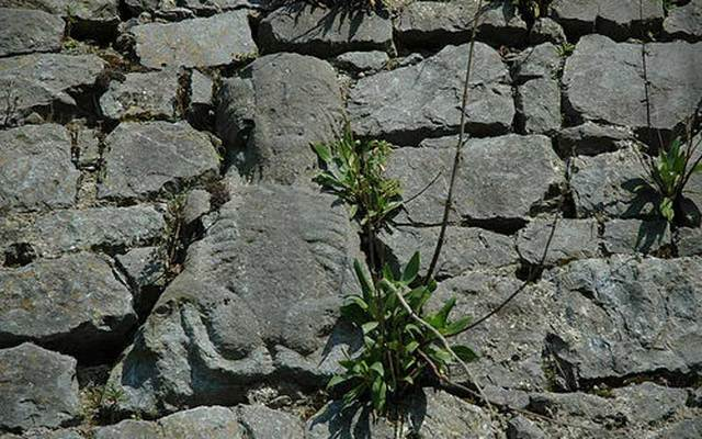 Sheela na Gig carving on town wall in Fethard, County Tipperary, Ireland.