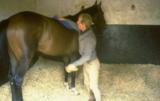 Mystery of Shergar the champion horse who was kidnapped in Ireland
