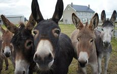 Thumb_donegal-donkey-sanctuary-group-facebook