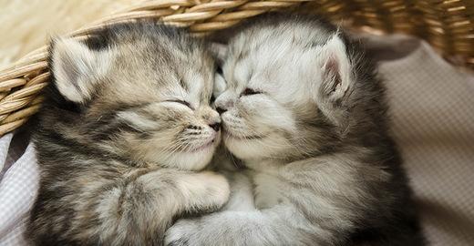 Cropped_kitten-cat-cuddler