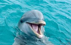 Thumb_mi_dolphin_laughing_smile_fish_istock