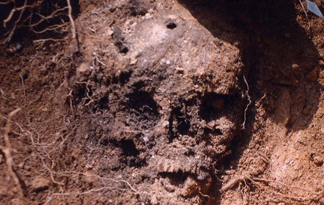 Skull discovered at Duffy\'s Cut with a bullet hole / puncture clearly visible.