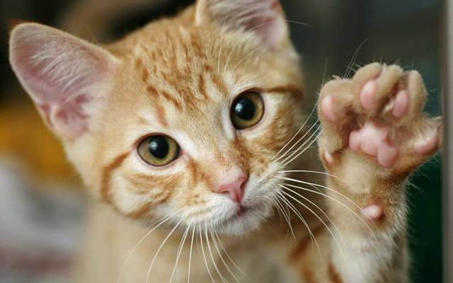 Cat holding a paw up.