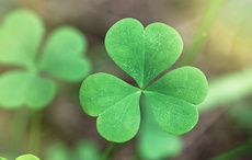 Thumb_shamrock-four-leaf-clover