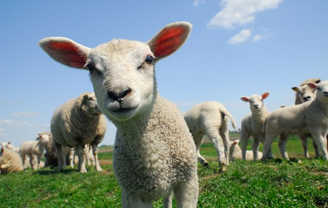 Stop and say hello to new furry friends in the west of Ireland.