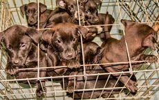 Thumb_caged_puppies