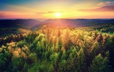 Thumb_aerial_shot_forest_trees_istock