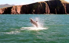Fond memories of meeting Fungie the Dolphin in Dingle