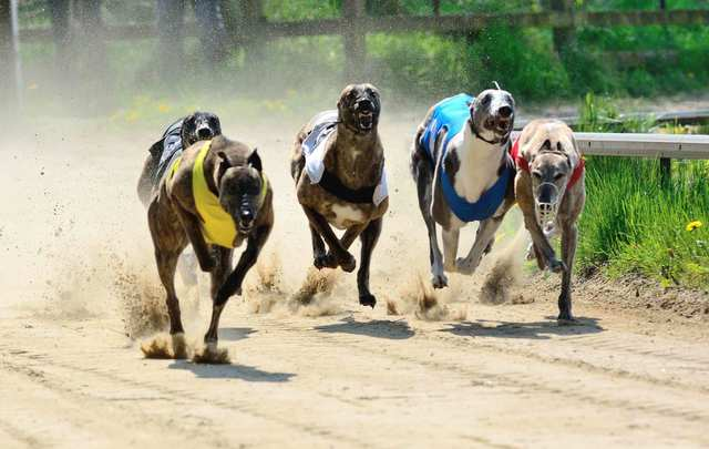 Clonbrien hero, an Irish champion greyhound racing dog, will lose winnings and race titles he won when it is believed cocaine was in his system.