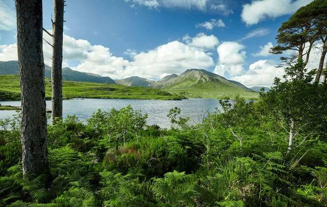 Are you a Pine Tree State native with Irish roots? This Maine Irish DNA and ancestry project could help you find your ancestors from Pine Island in Connemara.