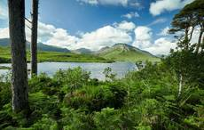 Thumb_pine-island-derryclare-lough-connemara-tourism-ireland