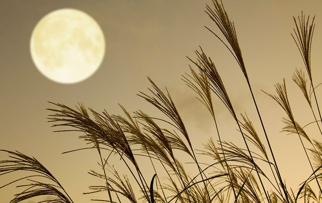 The 2017 Harvest Moon will take place tonight, October 5.