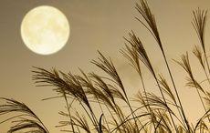 Thumb_harvest-moon-grass-istock