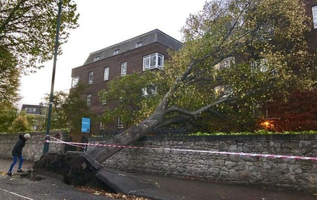 Storm Ophelia hits Dublin as trees fall down on a apartment block on Cylde Road Ballsbridge.