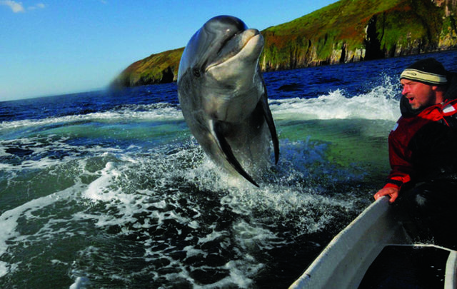 Fungie the dolphin has been hurt by recent ex-hurricane, Storm Ophelia.