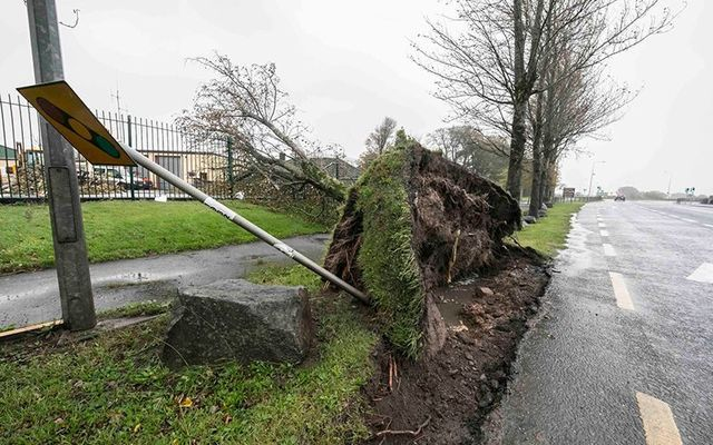 A downed tree in Co. Waterford after Ophelia.