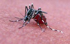 Thumb_mosquito-feeding