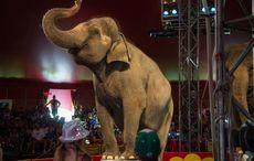 Thumb_elephant_circus
