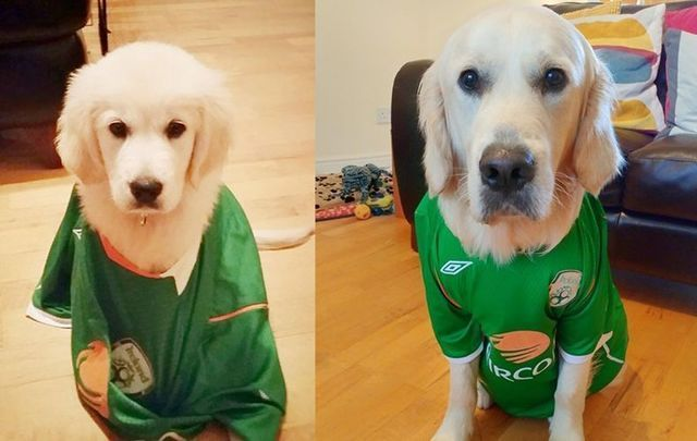 Who\'s a good boy! Louie the cutest Republic of Ireland soccer fan in his jersey, one year apart.