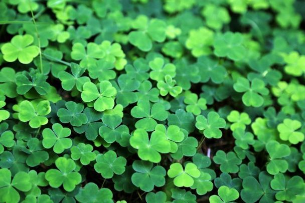 Shamrocks! We all know some symbols are most definitely Irish but could the symbols for new beginnings be made up.