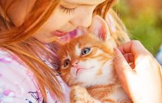 Thumb_cat-cuddler-ireland-istock
