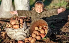 Thumb_mi_happy_little_girl_fields_potato_potatoes_istock__4_