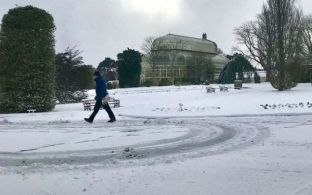 Snow fall at the National Botanic Gardens in Dublin.