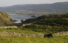 The myths and legends of Ireland's hound of deep, the Dobhar Chu
