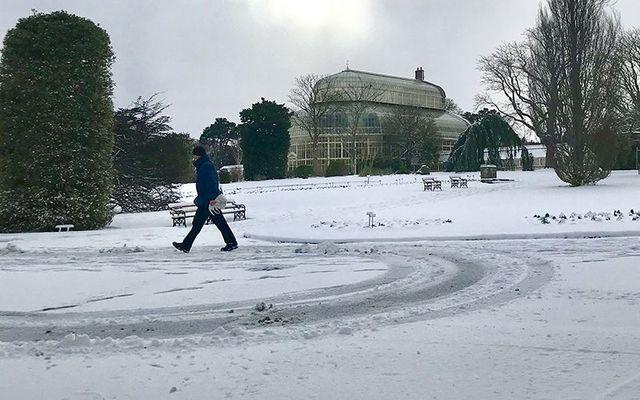 Snow in the Botanic Gardens, in Dublin.