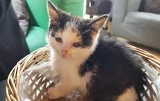 Thumb_1-lizzie-missing-kitten-cat-lounge-facebook