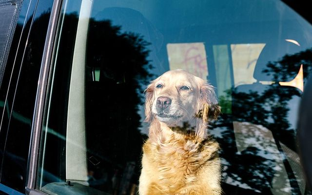 A dog was found by the Irish police locked in a hot van at the Bray Groove Festival.
