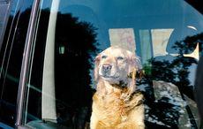 Thumb_dog-stuck-dar-istock